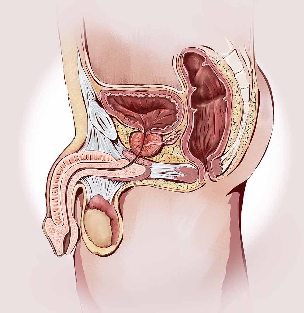 prostata-hombre